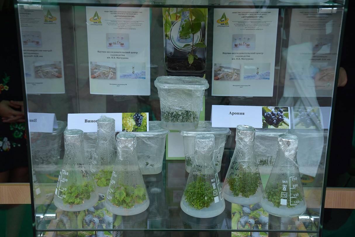 Выставочный стенд с растениями in vitro